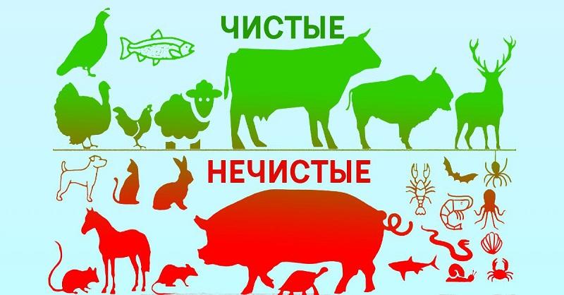 Ученые решили разобраться, почему Бог разделил животных на чистых и нечистых. Пересмотрю свое питание…