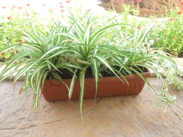 Комнатные растения, которые идеальны для спальни