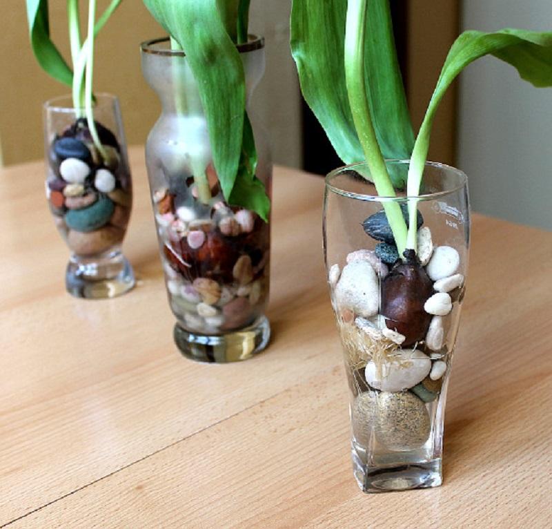 Цветущие тюльпаны круглый год! Секрет: вот как можно вырастить тюльпаны совсем без земли.