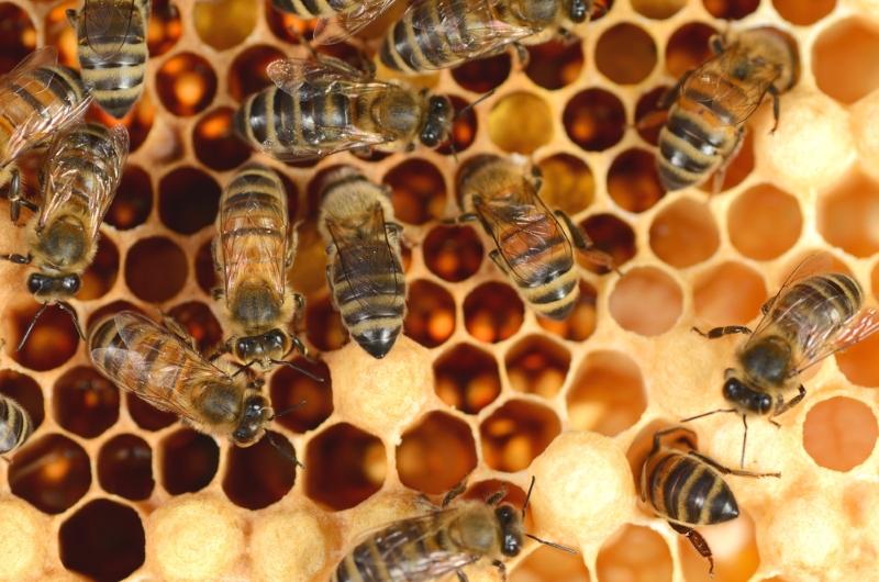 Излечивает желудок и кишечник: назойливый врач заставил принимать прополис, добился своего. Пчелиное спасение для всего ЖКТ.