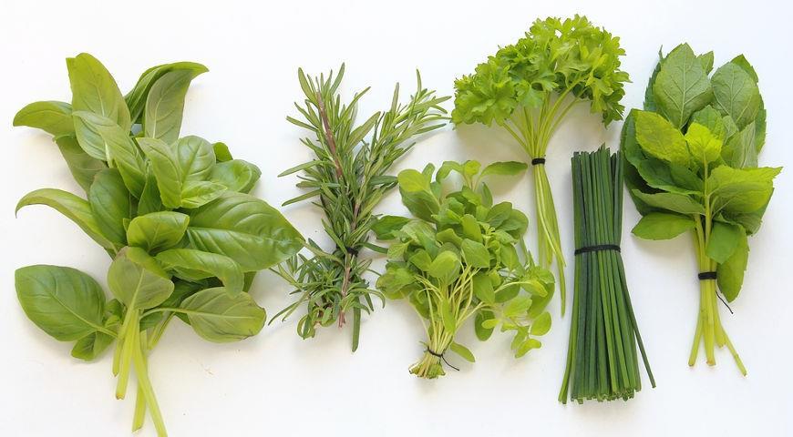 Пряные травы: кулинарное использование