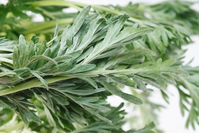 8 лекарственных трав для женщин: без всякой химии сохраняют молодость и здоровье. Дары полей для красоты.