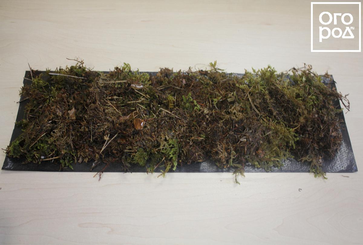 Размножение смородины зелеными черенками летом: мастер-класс с фото