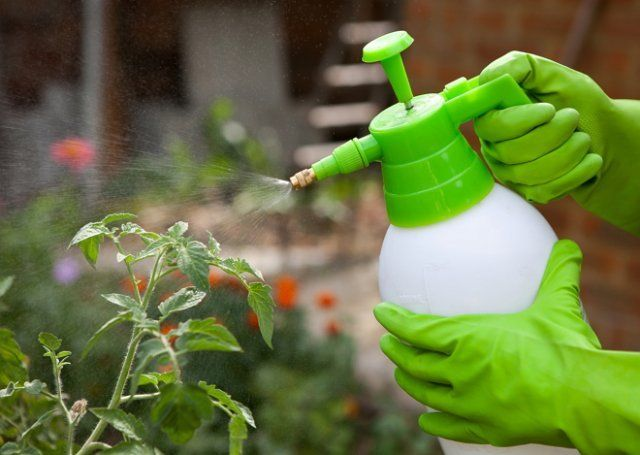 Мочевина: особенности удобрения и его применение. Все, что вы хотели знать о самом известном азотном удобрении.