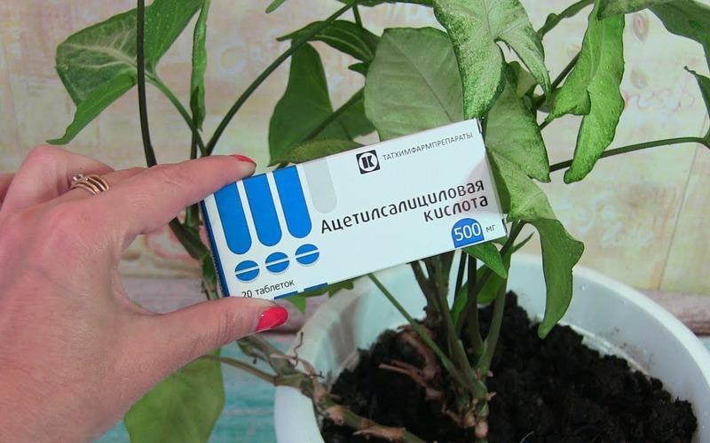 10 лучших подкормок для домашних растений: каждая максимум из 2 ингредиентов! Моей оранжерее не будет равных!