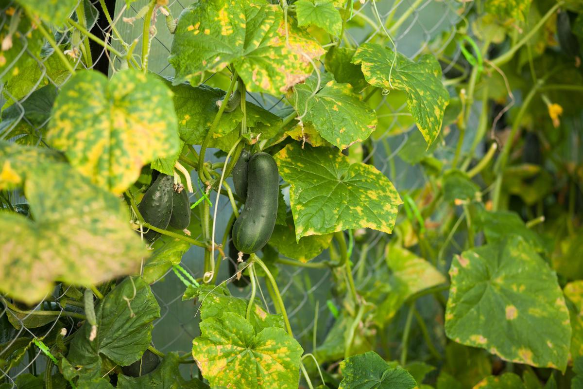 Пищевая сода для сада и огорода: 22 способа применения на участке
