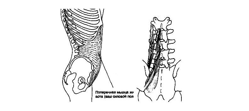 Тазовый «лифт»: Упражнения для мышц таза и позвоночника